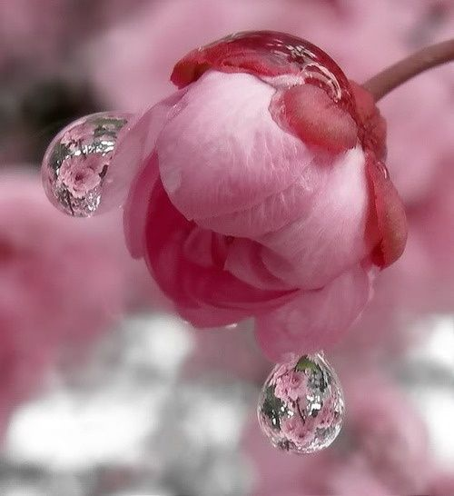 The water drops are like little pictures of the plant