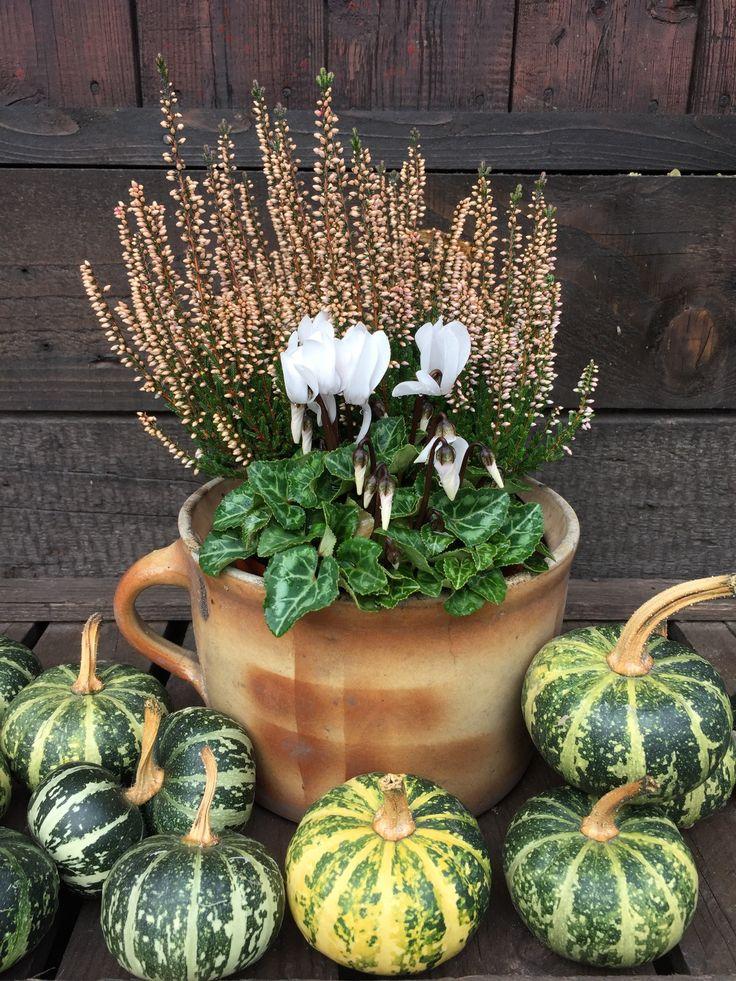 Fall/Garden