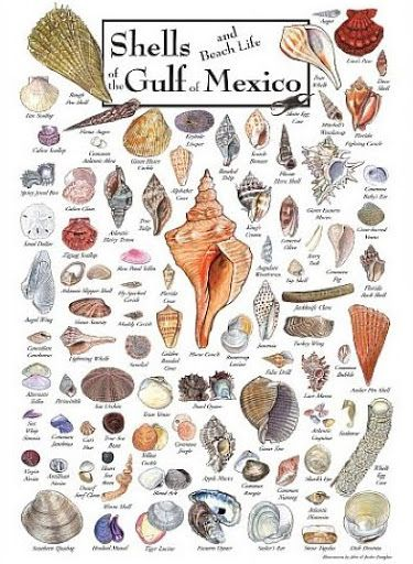 Florida Gulf of Mexico Seashell and Sea Life Poster: http://www.completely-coastal.com/2012/02/marine-sea-life-art-paintings-and.html