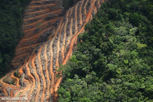 Clearing for oil palm in Sabah like some monster nails clawed out the forests