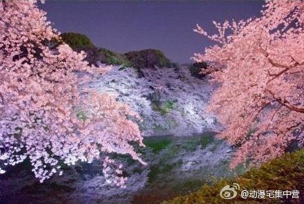 Beautiful sakura view in Japan #trip #japan #anime #cosplay
