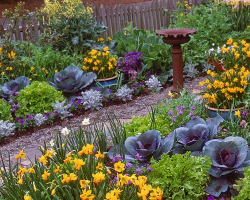 Edible landscape with cabbages - love the addition of edibles into the landscape - grow food not lawns!