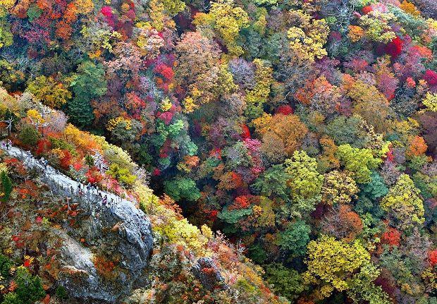 大台ケ原:紅葉彩る登山道 例年より1週間早く - 毎日新聞