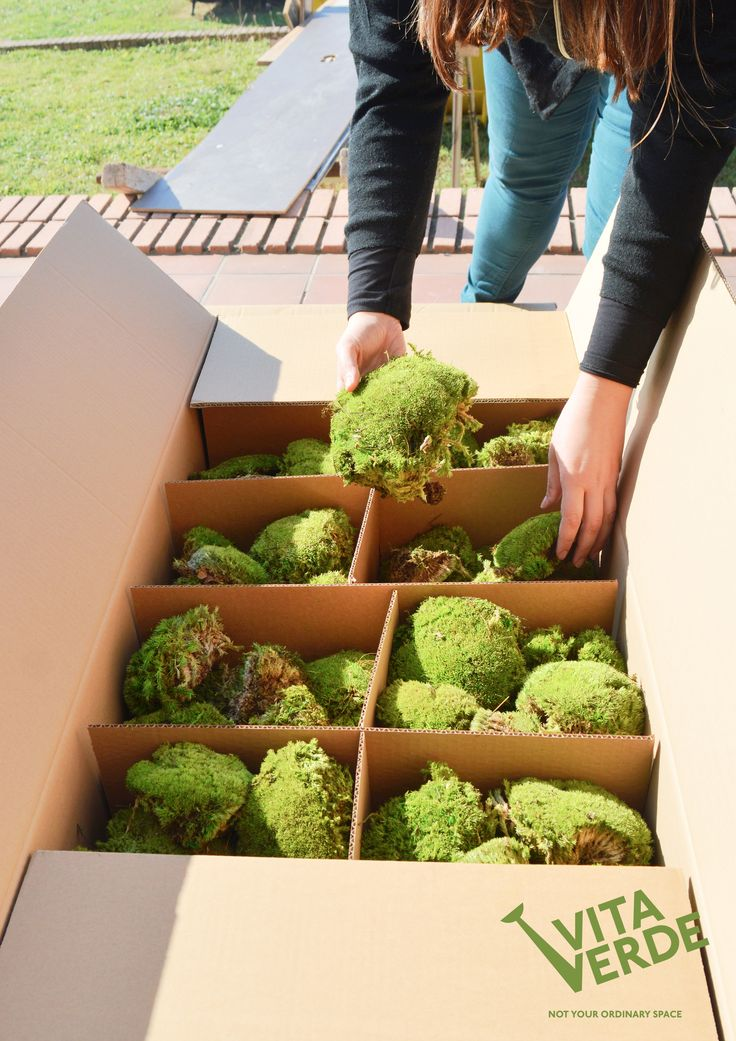 Our curious architect says this #moss is soft enough! Let's put it into shape! ;)