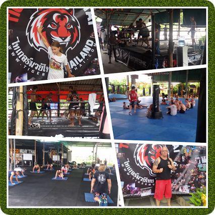 Fighter - Tiger Muay thai boxing – Google+