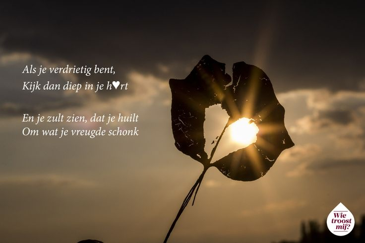 Wanneer je een dierbare verloren hebt, is het niet altijd makkelijk om de mooie herinneringen door het verdriet heen te zien. Praat mee met lotgenoten op http://www.wietroostmij.nl.