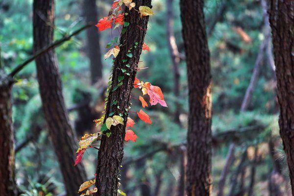 Los árboles florecen en Seoul, South Korea