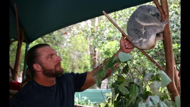 HHH and a koala #WWE