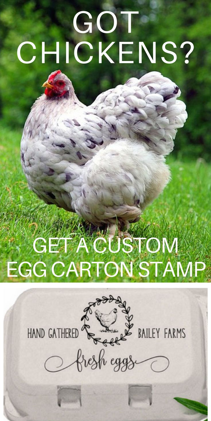 A Custom Egg Carton Stamp is a great way to personalize your farm or homestead. This Vintage style chicken coop stamp comes in several customizable sizes for egg cartons, tags and labels. It makes a great gift, especially a hostess gift or housewarming gift. Shop now at Southern Paper and Ink. #backyardchickens #raisingchickens #eggcartonlabels #eggcartons #chickens