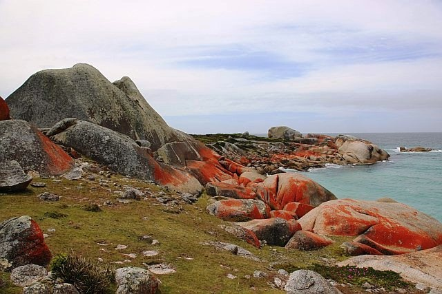 Beautiful Bay of Fires in Tasmania. The fiery, orange-hued rock is produced by lichen but the name of the region was actually given by an explorer in the 18th century who saw the fires of Aboriginal people on the beaches. Photo courtesy of Jo Unger, wife of Dr. Isadore Unger.