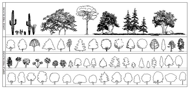 trees in plan - Google Search