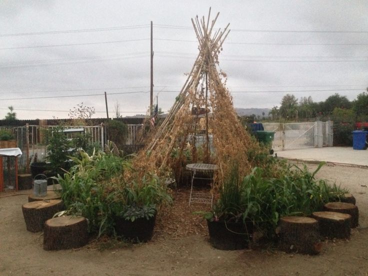 We grew some short corn around our bean teepee to keep the extreme heat off our plants or they would have fried in the first few days.
