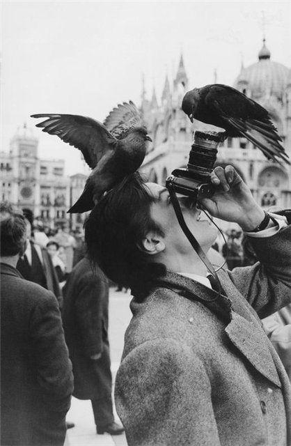 """Alain Delon Cette photo à été prise le 12 mars 1962 par Jack Garofalo, et a été publiée dans le journal Paris Match avec comme légende """"Journée de détente, le 12 mars 1962, parmi les touristes de la place Saint-Marc""""."""