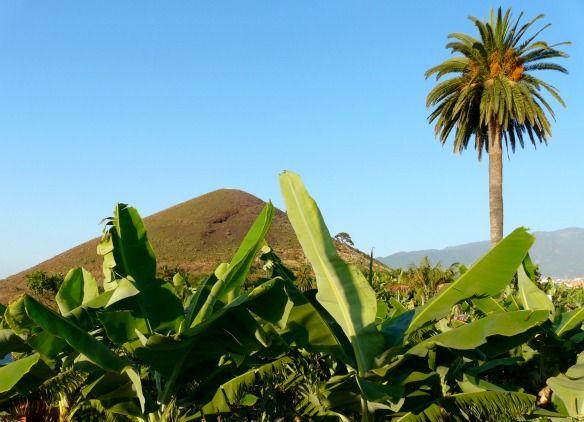 Neu im Blog: 7 Tipps für Teneriffa - Vulkane, schwarze Strände & Wale. http://www.travelontoast.de/2013/07/7-tipps-fuer-teneriffa-vulkane-schwarze-straende-wale/ #condorblogteneriffa