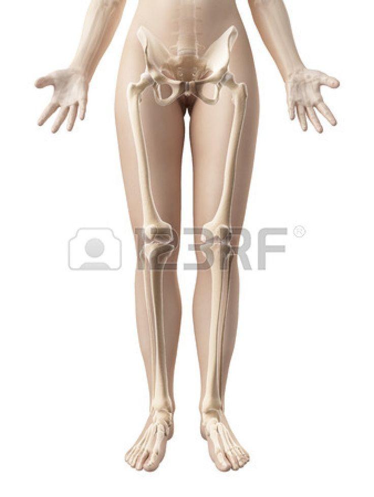 17 meilleures id es propos de jambe humaine sur pinterest manuel d 39 anatomie jambe anatomie - Photo jambe femme ...