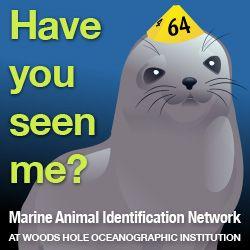 Woods Hole: Marine Animal Identification Network - Citizen Science Program