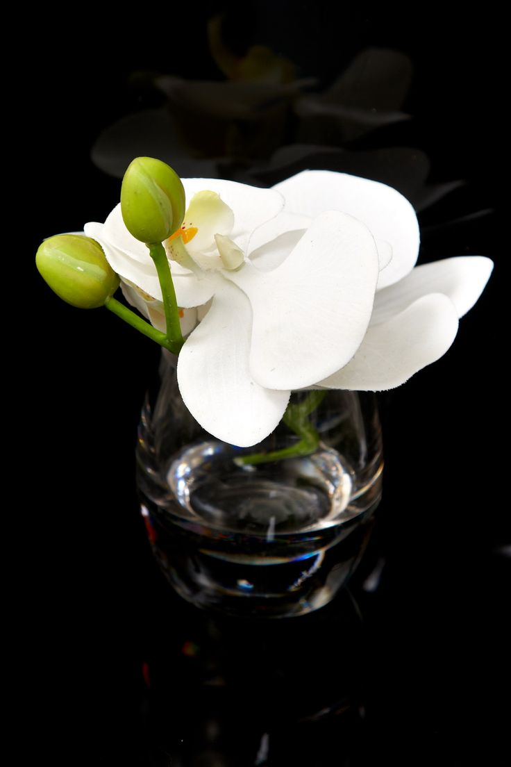 Artificial Orchid White 6in $7.99