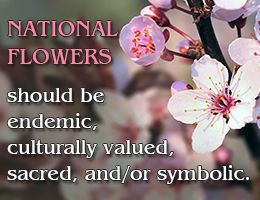 National flowers of different countries of the world.