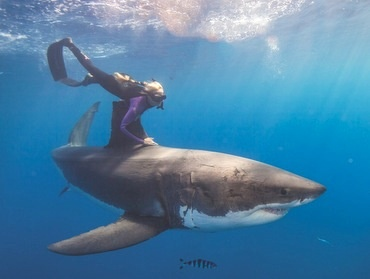 Riding a Great White Shark. If only I can get over my fear of oceans....we would become the overlords of the ocean.