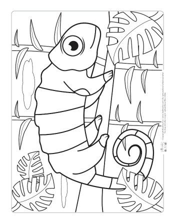 Safari And Jungle Animals Coloring Pages For Kids Color Pages For