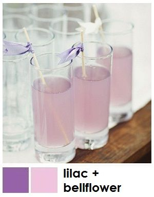Lilac + bellflower