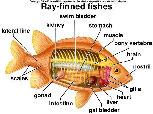 Fish Dissection Worksheet on Mixtures Water 6th Grade Science Worksheet