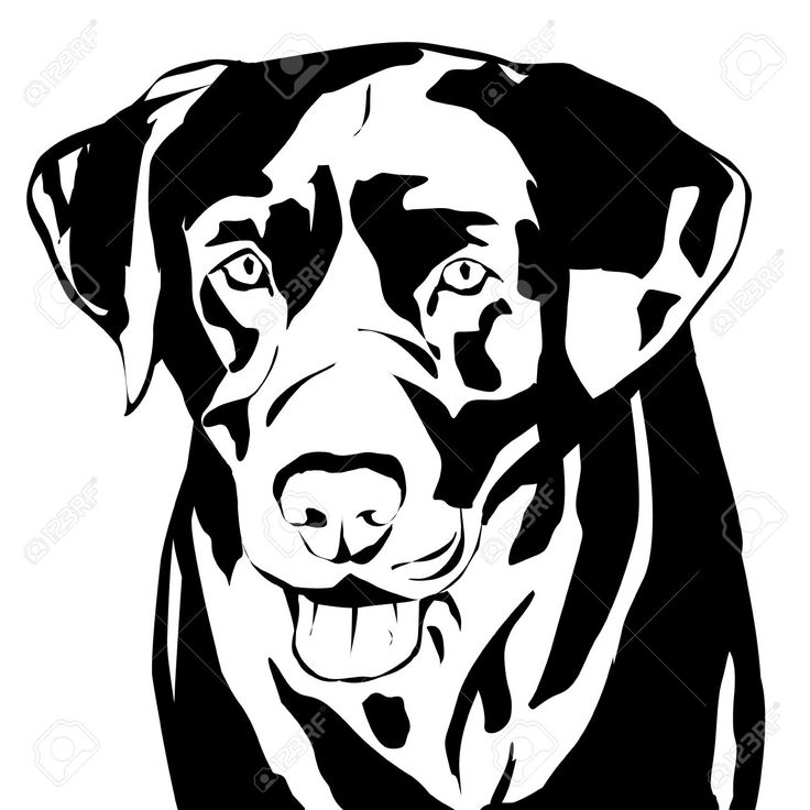 http://nl.123rf.com/photo_53553936_vector-silhouet-van-een-hond-op-een-witte-achtergrond.html?term=black+labrador
