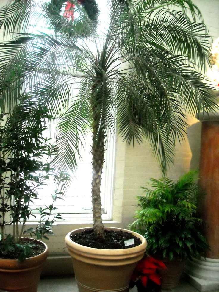 17 best images about air purifying house plants on for Pictures of indoor palm plants