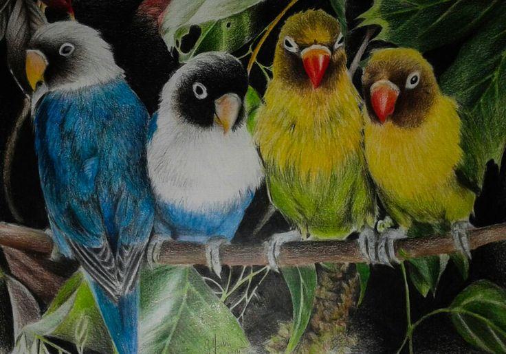 Parrots <3 (colored pencils)