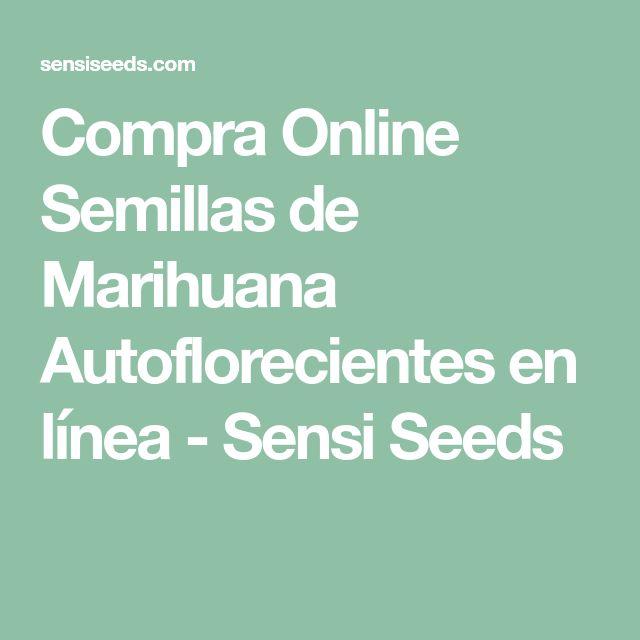 Compra Online Semillas de Marihuana Autoflorecientes en línea - Sensi Seeds