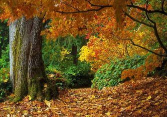 imagens da floresta temperada sazonal