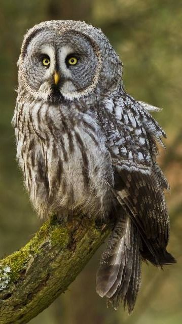 All about owls: http://ourbeautifulworldanduniverse.com/owls.html