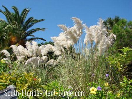central florida vegetable gardening guide