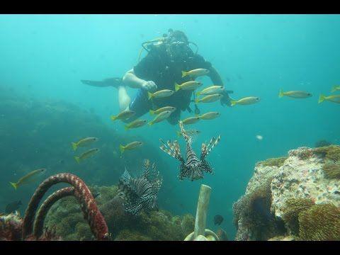 giftige & gefährliche Tiere | King Cruiser's Wreck und mehr Thailand | Tauch-Vlog #07 | #abgetaucht - YouTube