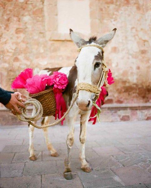 Wedding donkey in Zacatecas, Mexico