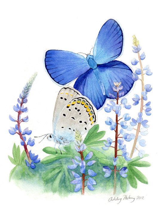 Karner Blue Butterfly & Wild Lupin painting by FromSkytoSea, $75.00