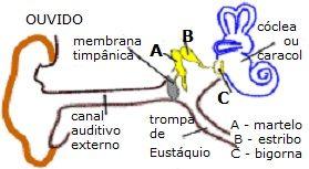 A enfermidade Misofonia foi catalogada em 1991, Trata-se de Ódio ao Som, um distúrbio neurológico da sensibilidade auditiva contra sons fortes ou fracos.