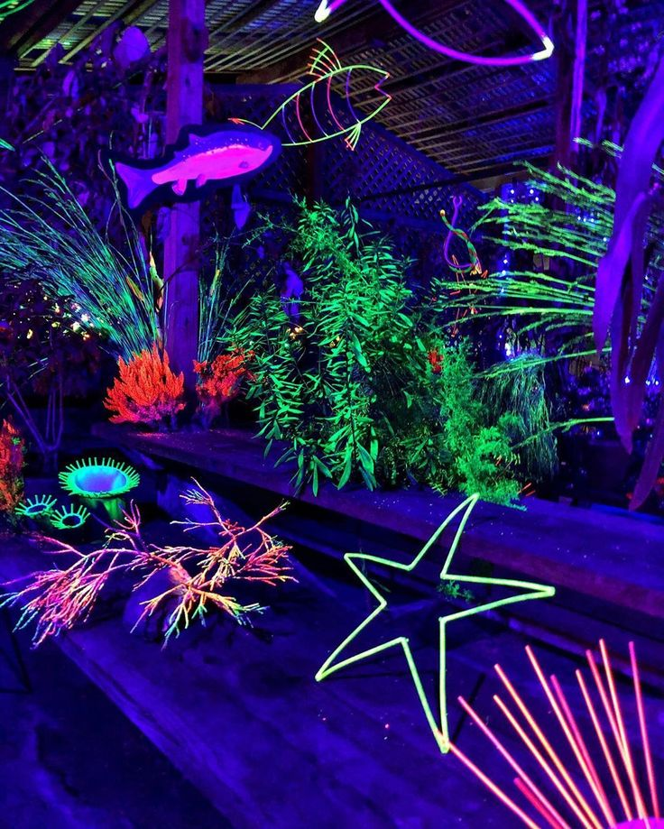 Festival of Lights . Mendocino Coast Botanical Gardens . 2020