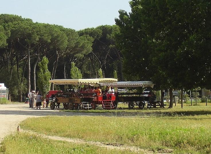 gita in carrozza nella tenuta di San Rossore, Pisa