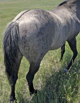 grulla singles Translate grulla see authoritative translations of grulla in english with audio pronunciations.