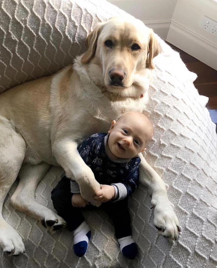 Dog babysitter at your service. #dogpictures #dogs #aww #cuteanimals #dogsoftwitter #dog #cute