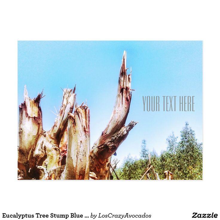 Eucalyptus Tree Stump Blue Sky Postcard