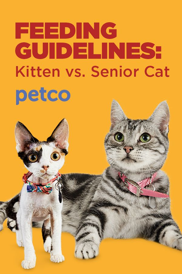 Discover How To Find The Best Feeding Method For Your Individual Kitten Or Cat With This Cat Food Guide Cats And Kittens Kittens Cats