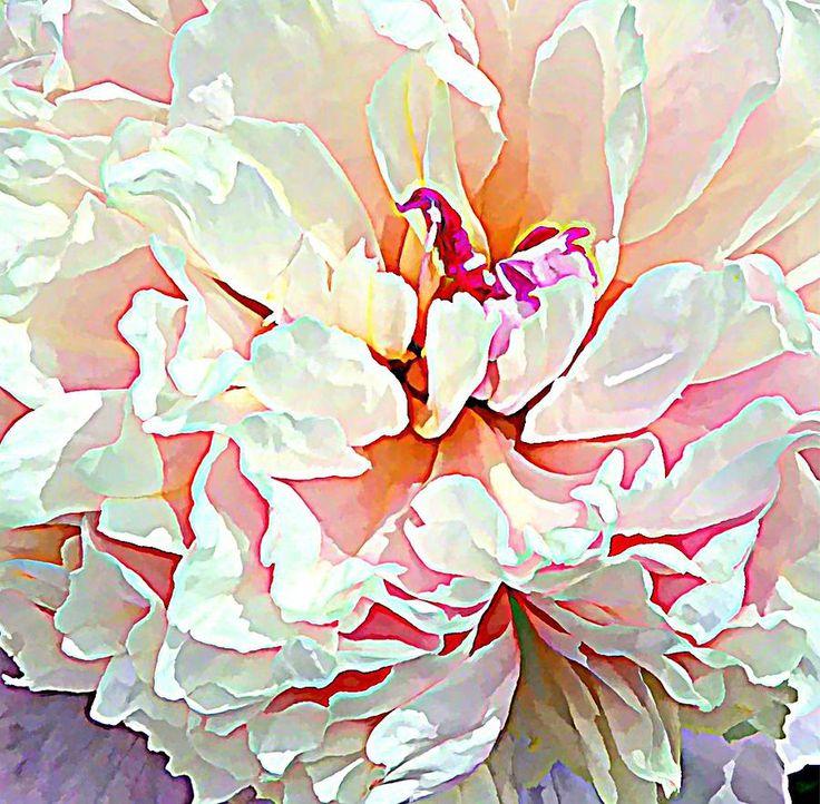Spring Peony Painting  - Spring Peony Fine Art Print