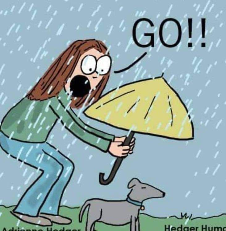 Pin By Sheryl Savord On Funny Rain Humor Funny Rain Quotes Rainy Day Quotes