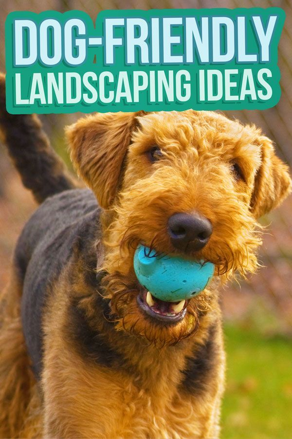 Backyard Landscaping Ideas Your Dog (and You) Will Love