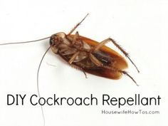 Wish i knew how to make this when i lived in an apartment because no matter how many times we had the exterminater come out nothing ever worked, probably the reason I have ocd when it comes to cleaning now.  How To Get Rid Of Cockroaches (and DIY Roach Killer) - Housewife How To's