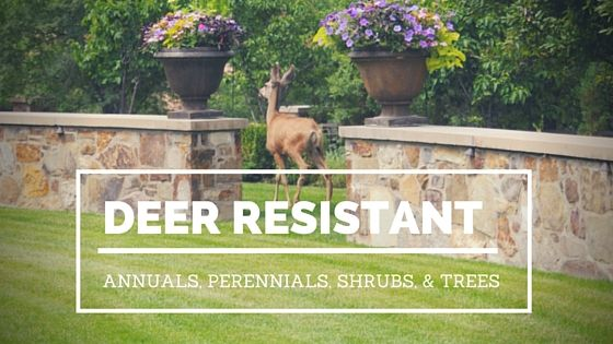 A great guide to choosing deer resistant plants.