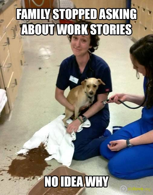 Did I tell you about the one where the abscess had maggots? Wait, where are you going... #vetlife #VetMed #VetHumor