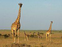 The 25 Best Safari Guides